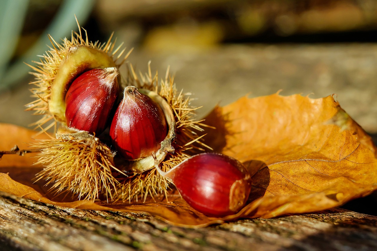 Under the Spreading chestnut tree なのです