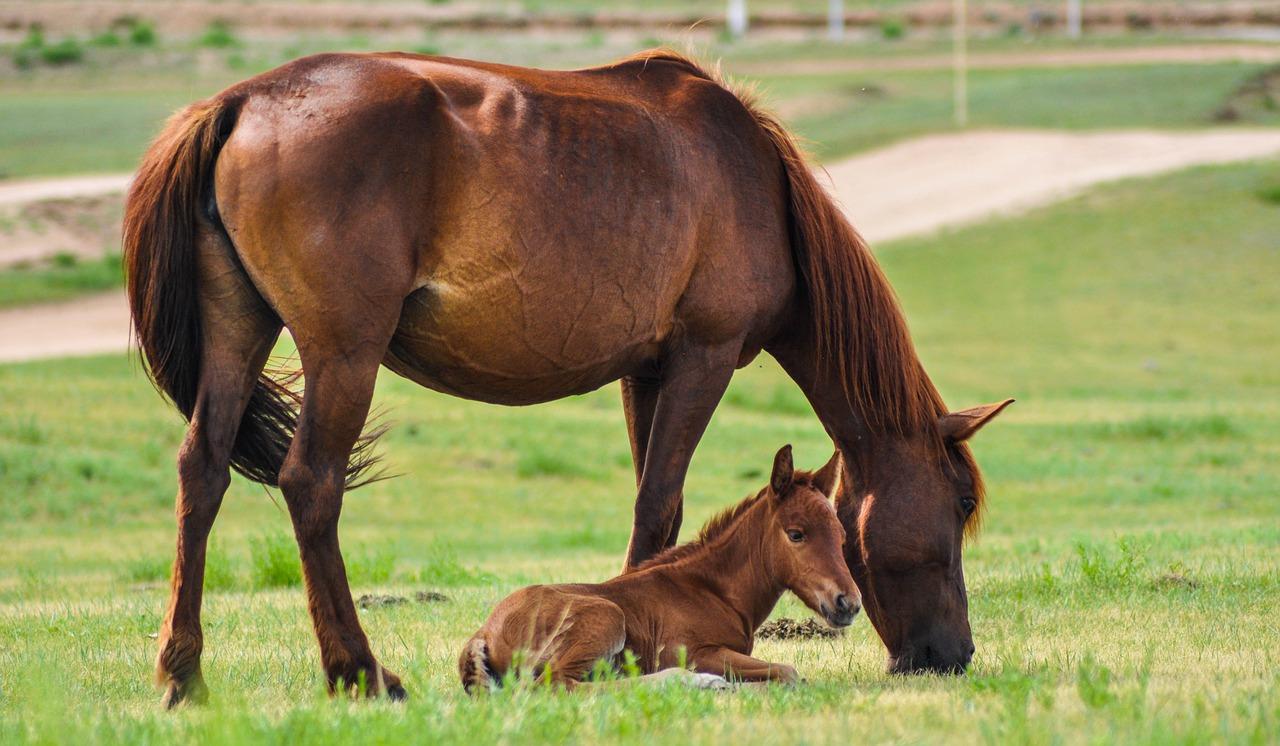 お馬の親子 なのです