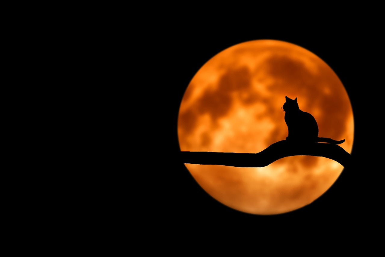 月夜の晩に なのです