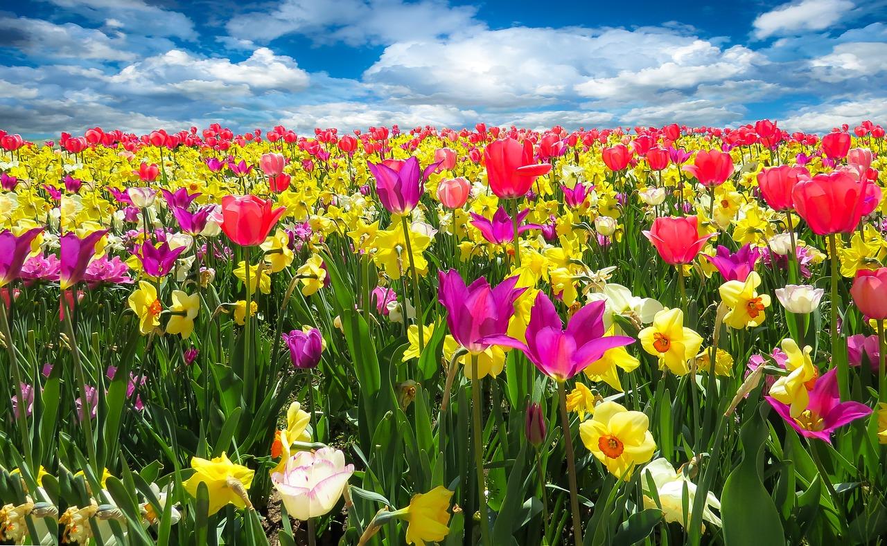 春の歌 なのです