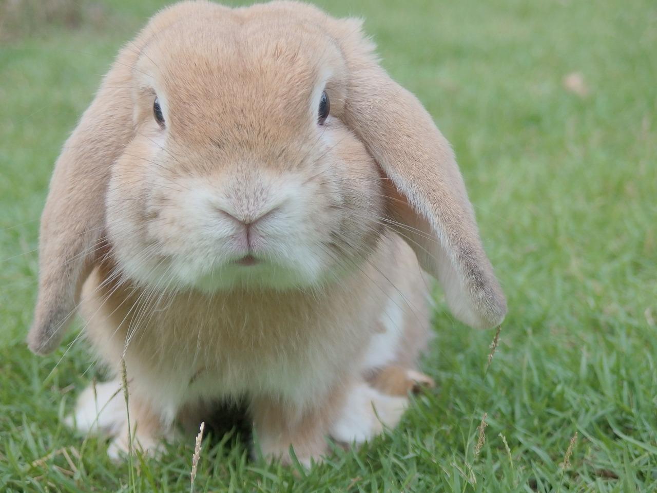 ウサギのパンツ なのです