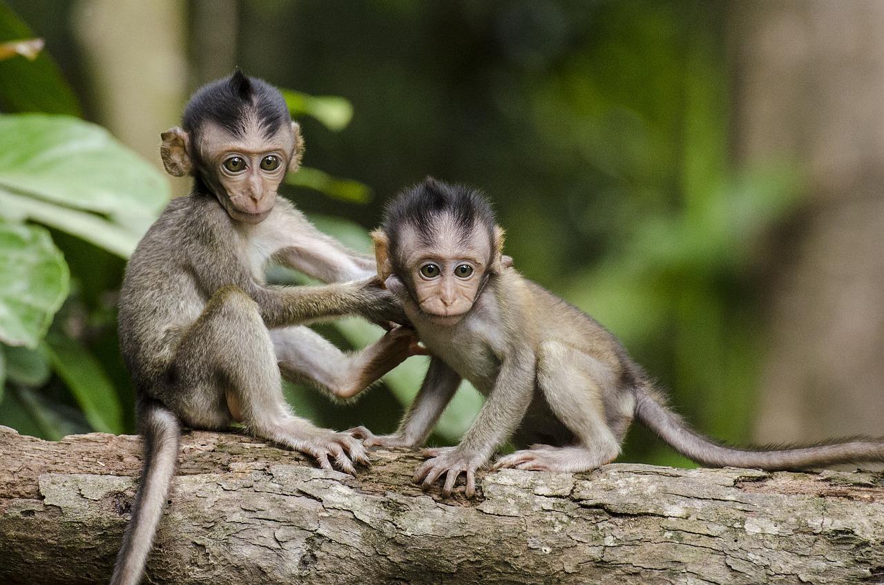 Ten Little Monkeys なのです